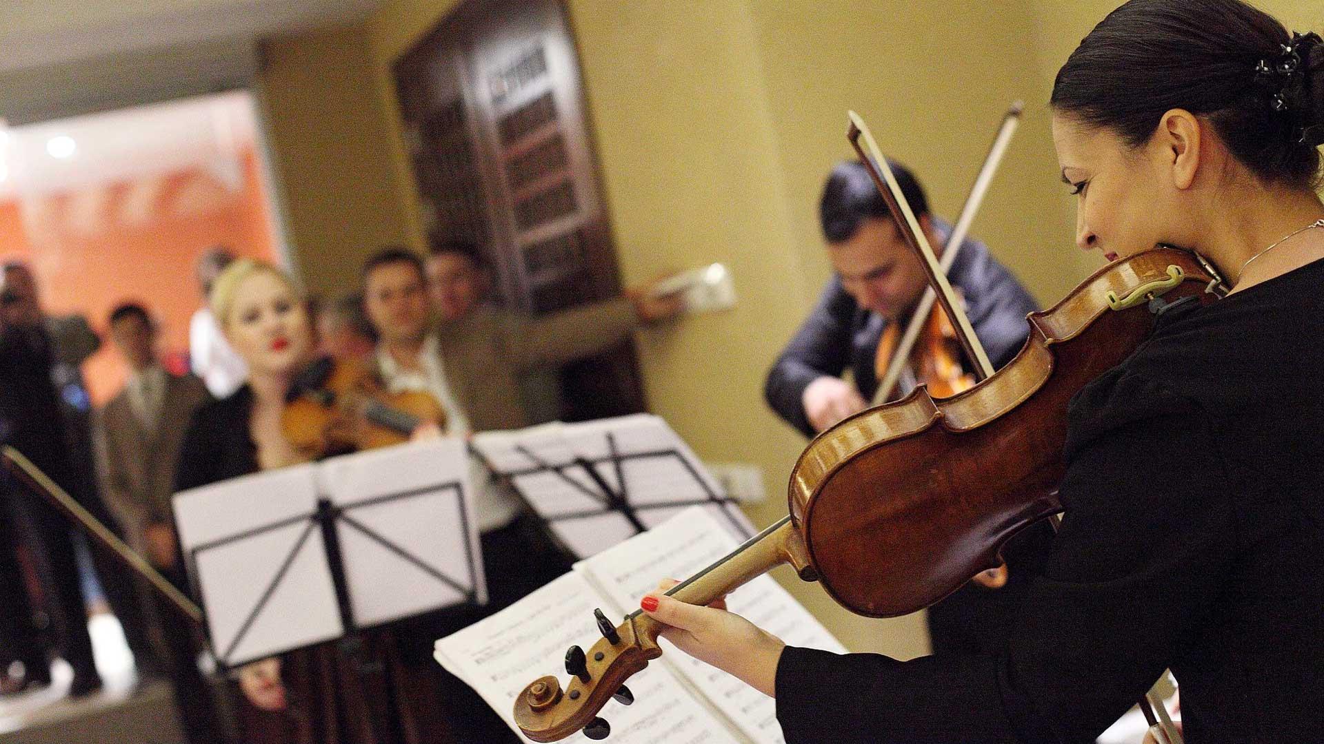 korporativna desavanja violina