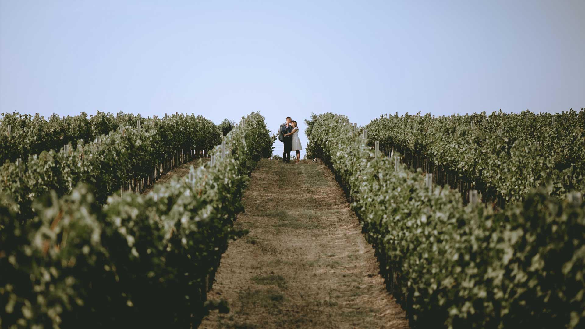 vencanje vinograd