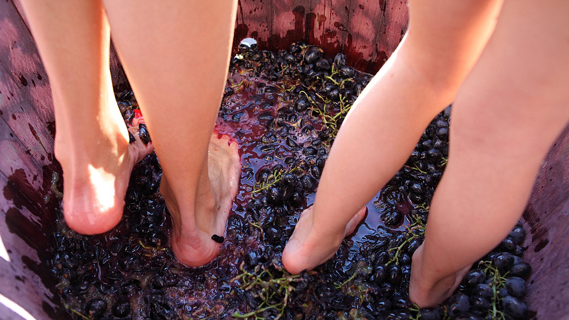 Vinarija sapat muljanje grožđa