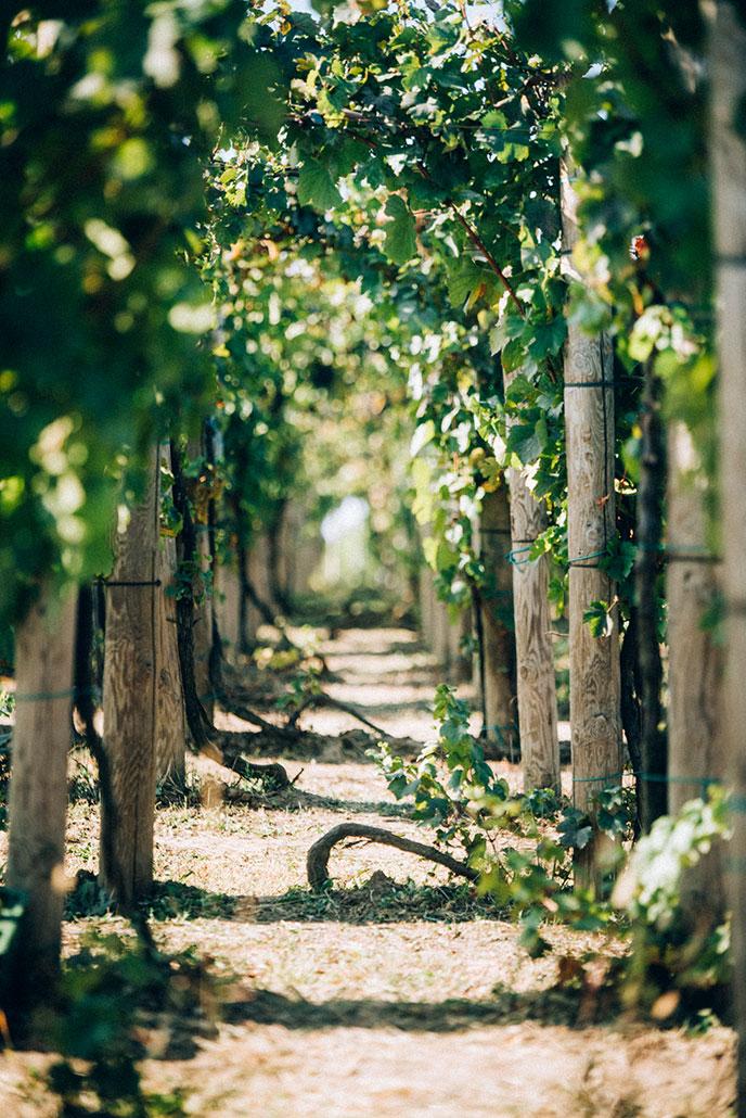 Vinograd Sapat